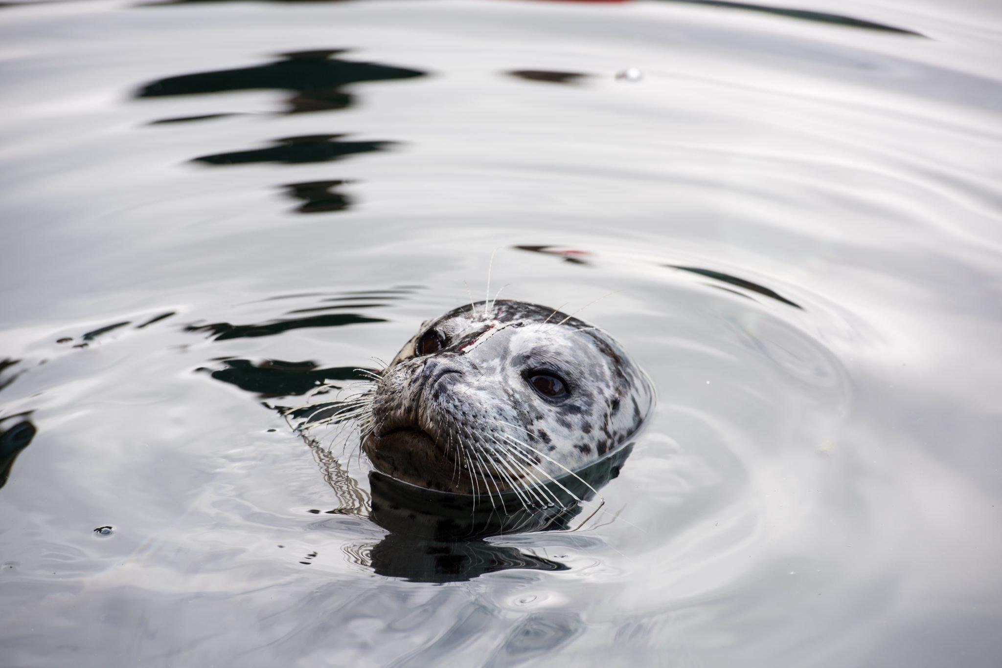 Seals - Snaefellsnes Day Tour